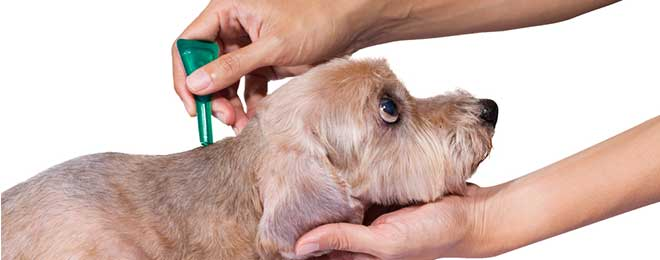 5 Types of Flea Medicine for Dogs